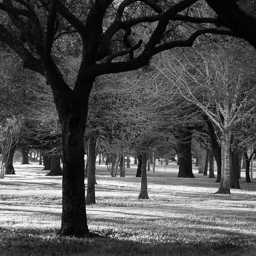 janbuchholtz trees winter monochrome