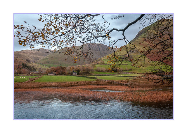 Across the reedy water...