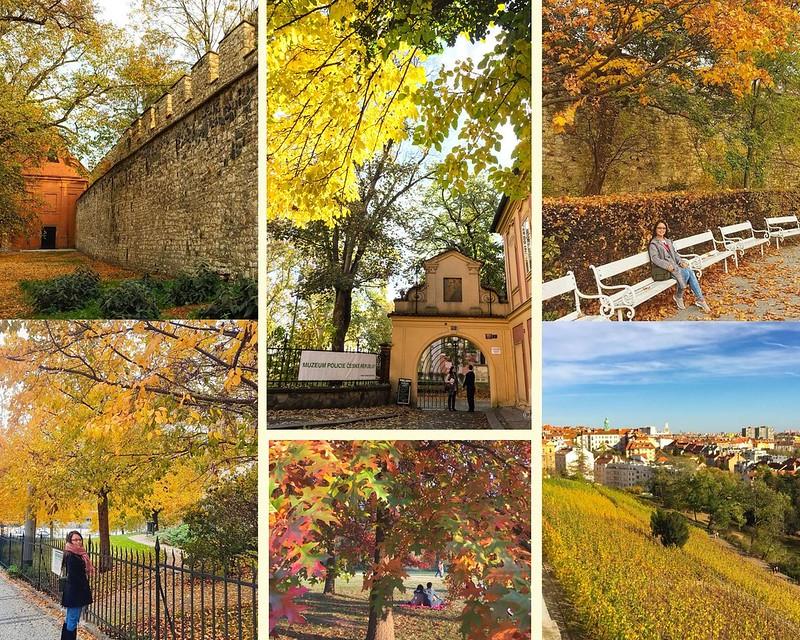 Orange Bordered Autumn and Fall Photo Collage