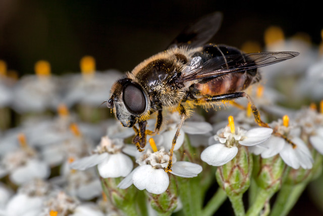 Pollinator - _TNY_5423