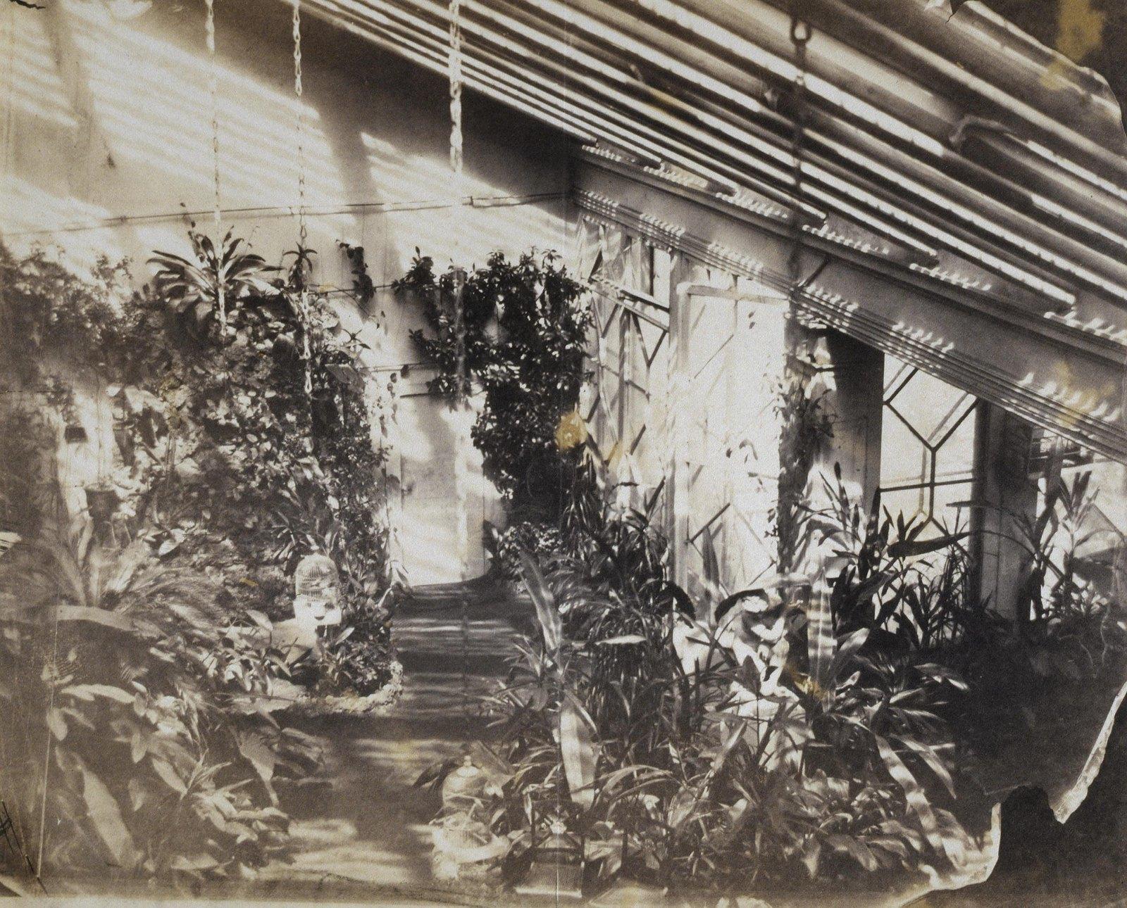 Зимний сад при доме Левашовых на Фонтанке. 1850-е