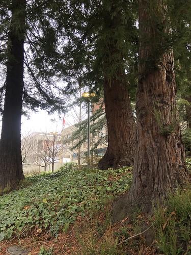 Wonderful Trees on Campus