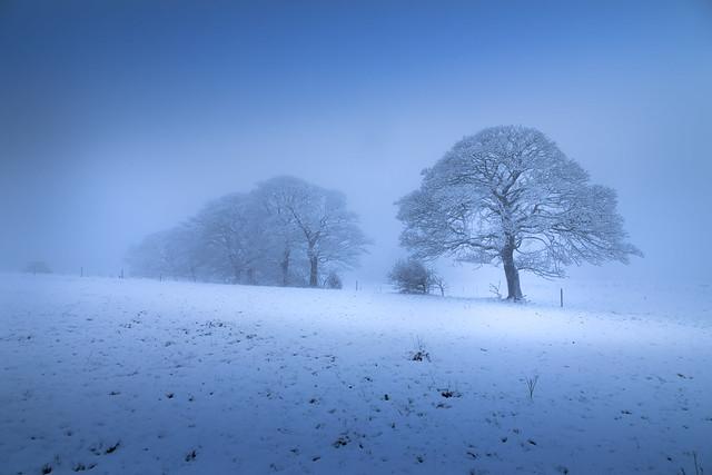 Blue Hour Winter