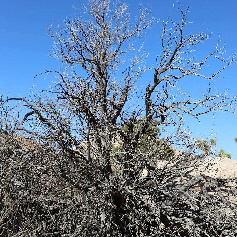 wild-dead-tree