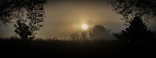 morning foggyday fremontca quarrylakes trees sunlight fog lake fall morningovercast landscape
