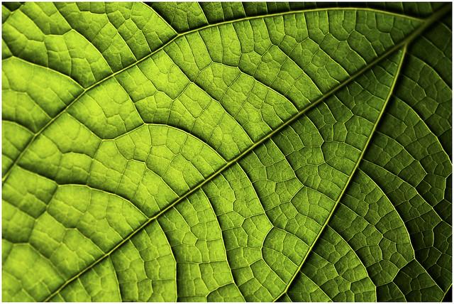 Landscape in a Leaf...