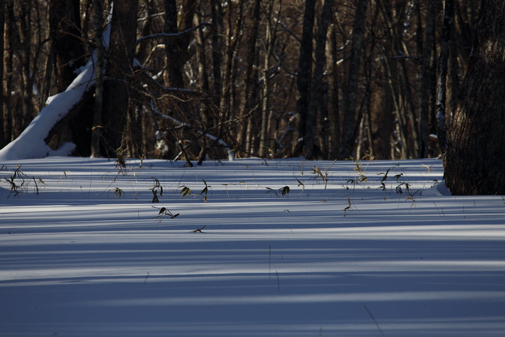 冬の奥日光 自然研究路