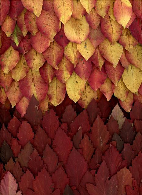 60905.11 Viburnum prunifolium, Physocarpus opulifollius 'Monlo'