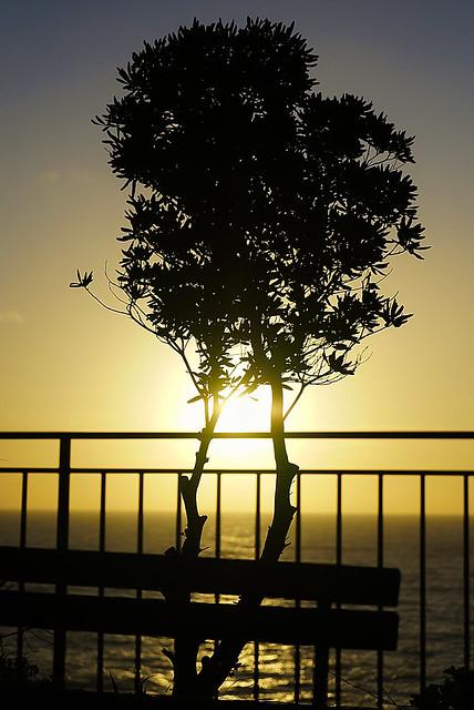 Backlight sunset (in Explore)