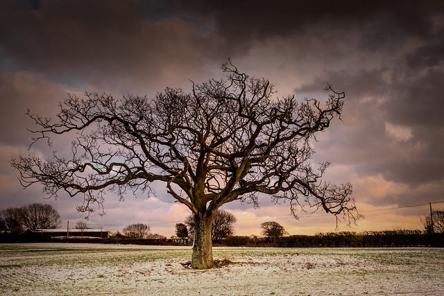 Rural Kent in winter