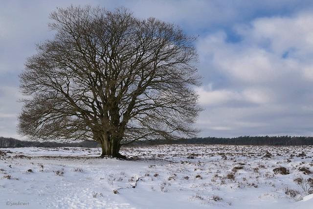 Winter op Planken Wambuis 1.