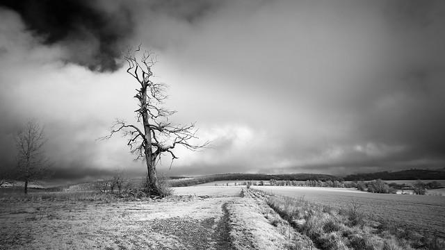 A weather-beaten vista