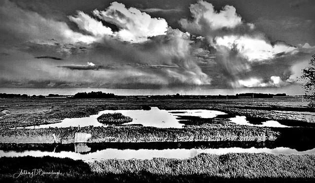 Fenland Spring Landscape 619 bws1a-1