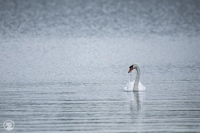 Swan-Lake-Fall-2020--2
