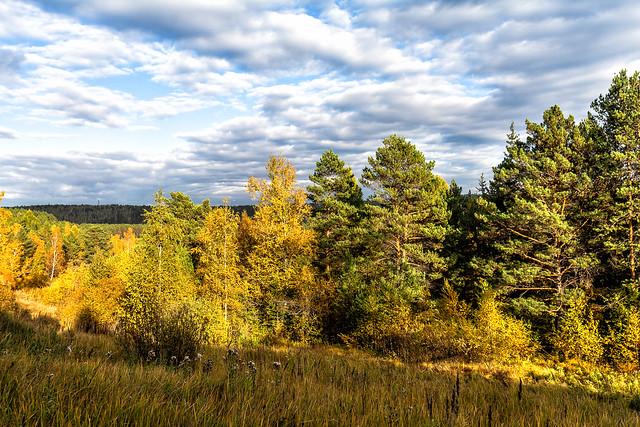 осень опушка леса