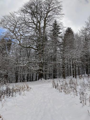 Balbirnie Snow, Scotland
