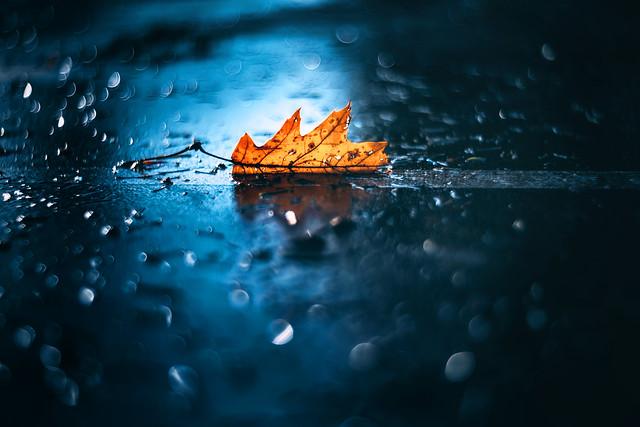 Oak Leaf in Rain