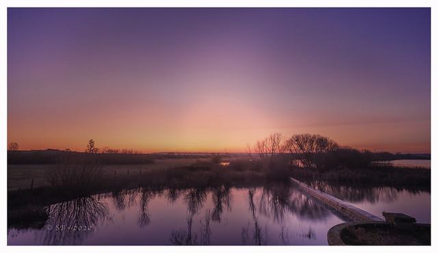 Birch-Sunset-3