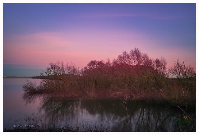 Birch-Sunset-2