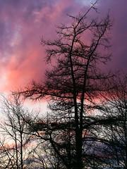 Sunset in Timberlea,  Nova Scotia.