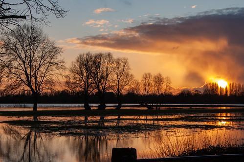 cambridgeshire gbr river scenic sunset unitedkingdom winter uk goldenhour reflection england stives thethicketpath