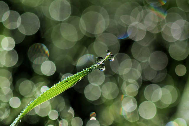 Droplets and bokeh