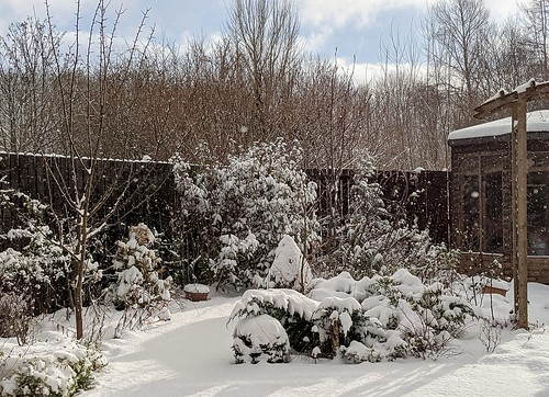 garden snow 2 | by piningforthewest