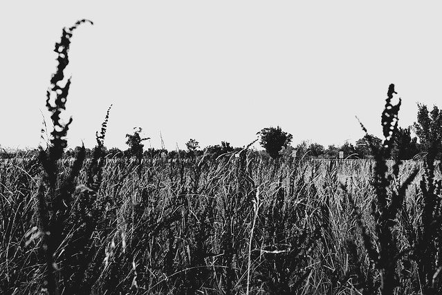 The field beside the highway.