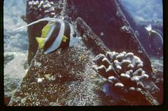 54-46 Kiribati Canton Island UW Ocean Moorish Idol