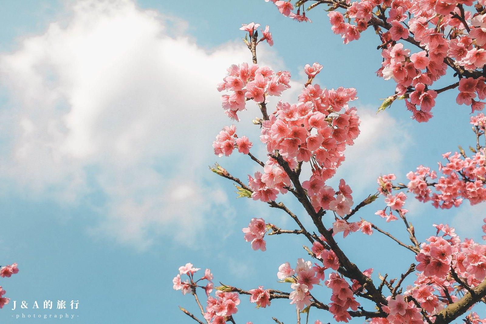 最新推播訊息:熱門春季賞櫻景點,搭捷運就能輕鬆抵達