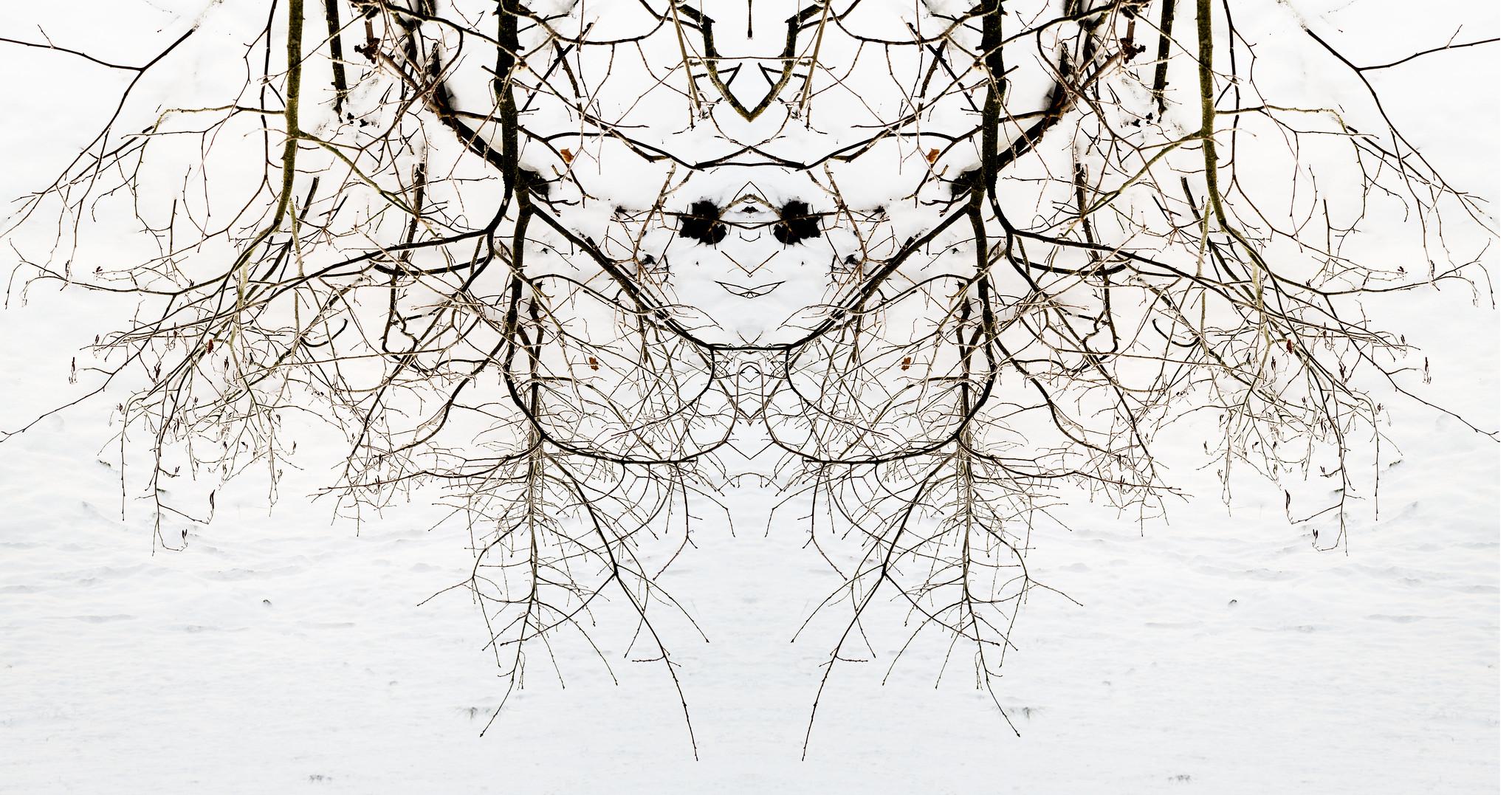 spiegelung-zweige