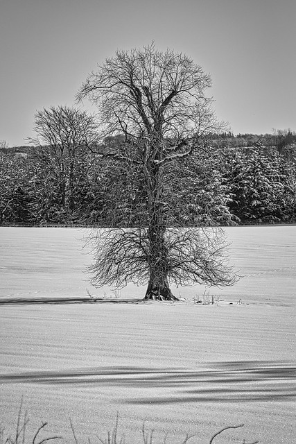 Tree in B&W.