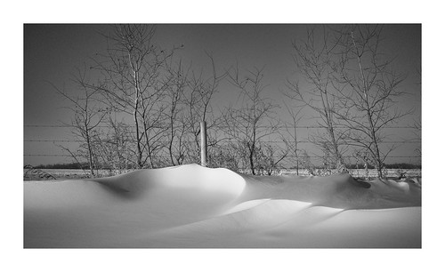 tree x100v bw structure trees nature vanveenjf alberta canada kanada forest creation snow cold fence drifting winter sturgeon fujifilm lens camera fujinon 23mm