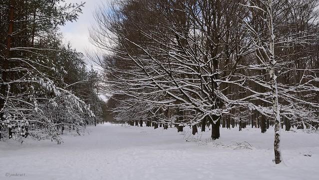Winter op Planken Wambuis 3.