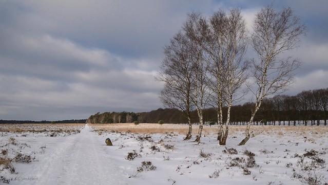 Winter op Planken Wambuis 2.