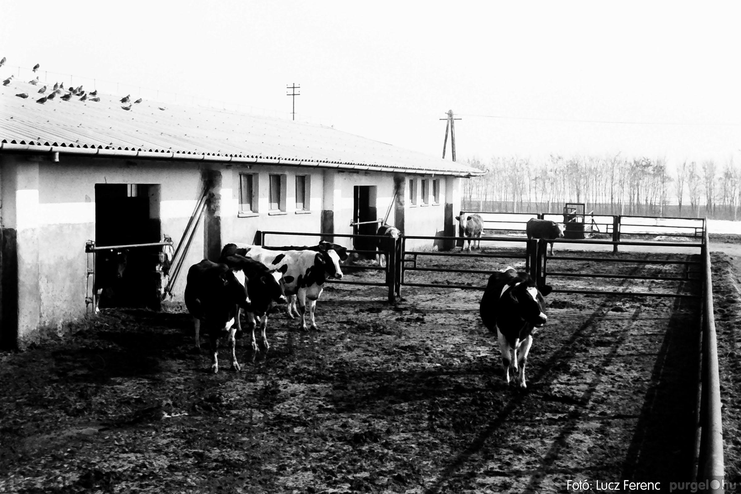 033-034. 1976. Élet a sápi tehenészetben 018 - Fotó: Lucz Ferenc.jpg