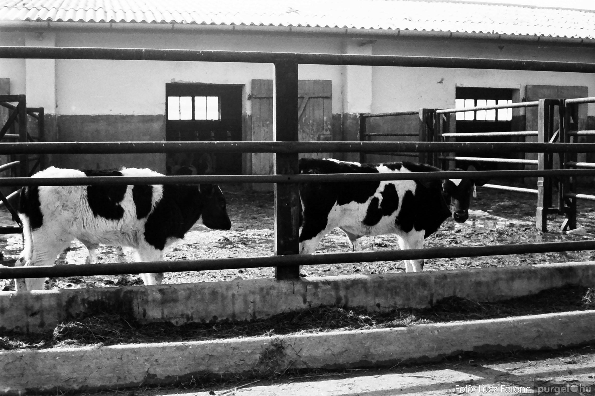 033-034. 1976. Élet a sápi tehenészetben 013 - Fotó: Lucz Ferenc.jpg