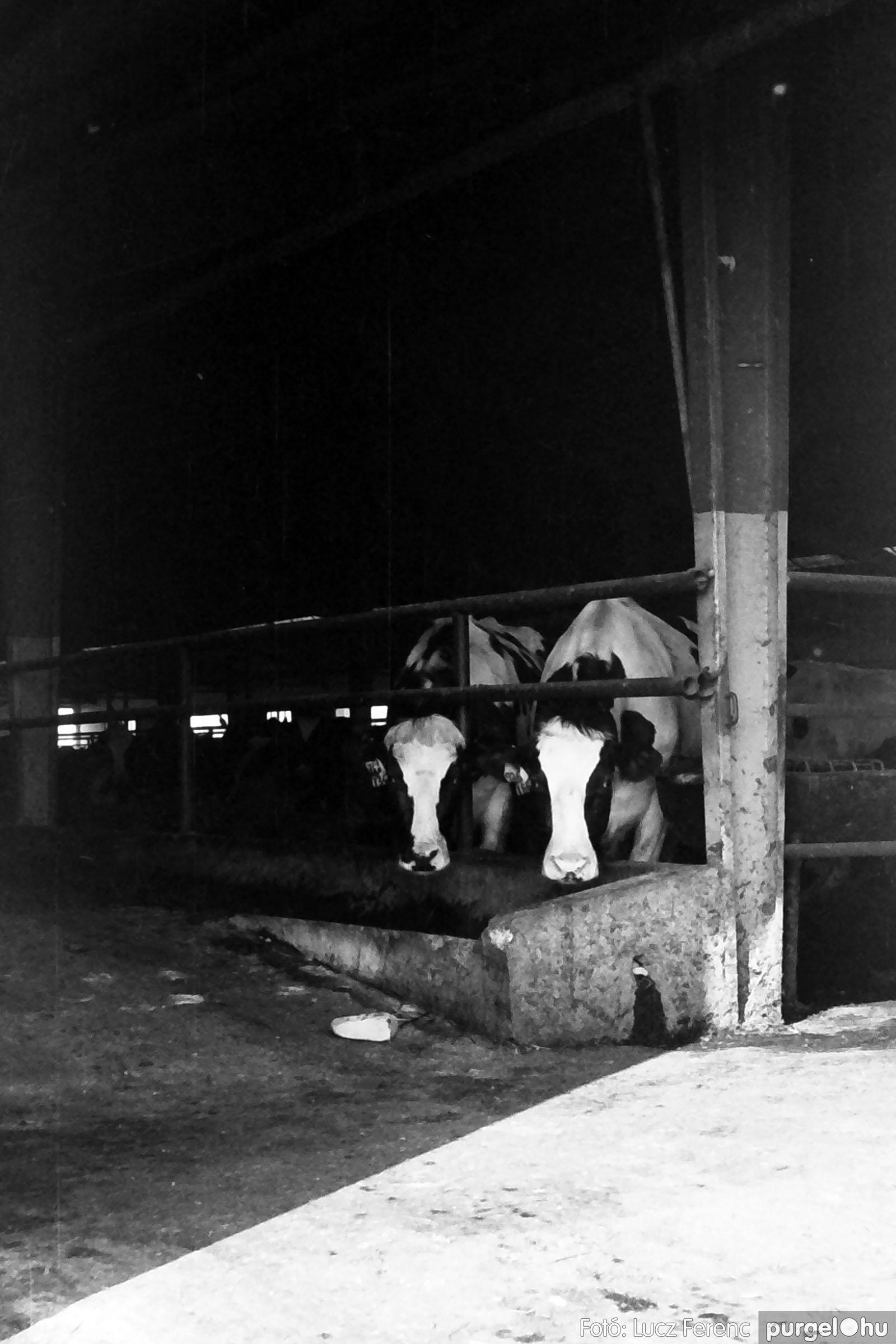 033-034. 1976. Élet a sápi tehenészetben 005 - Fotó: Lucz Ferenc.jpg