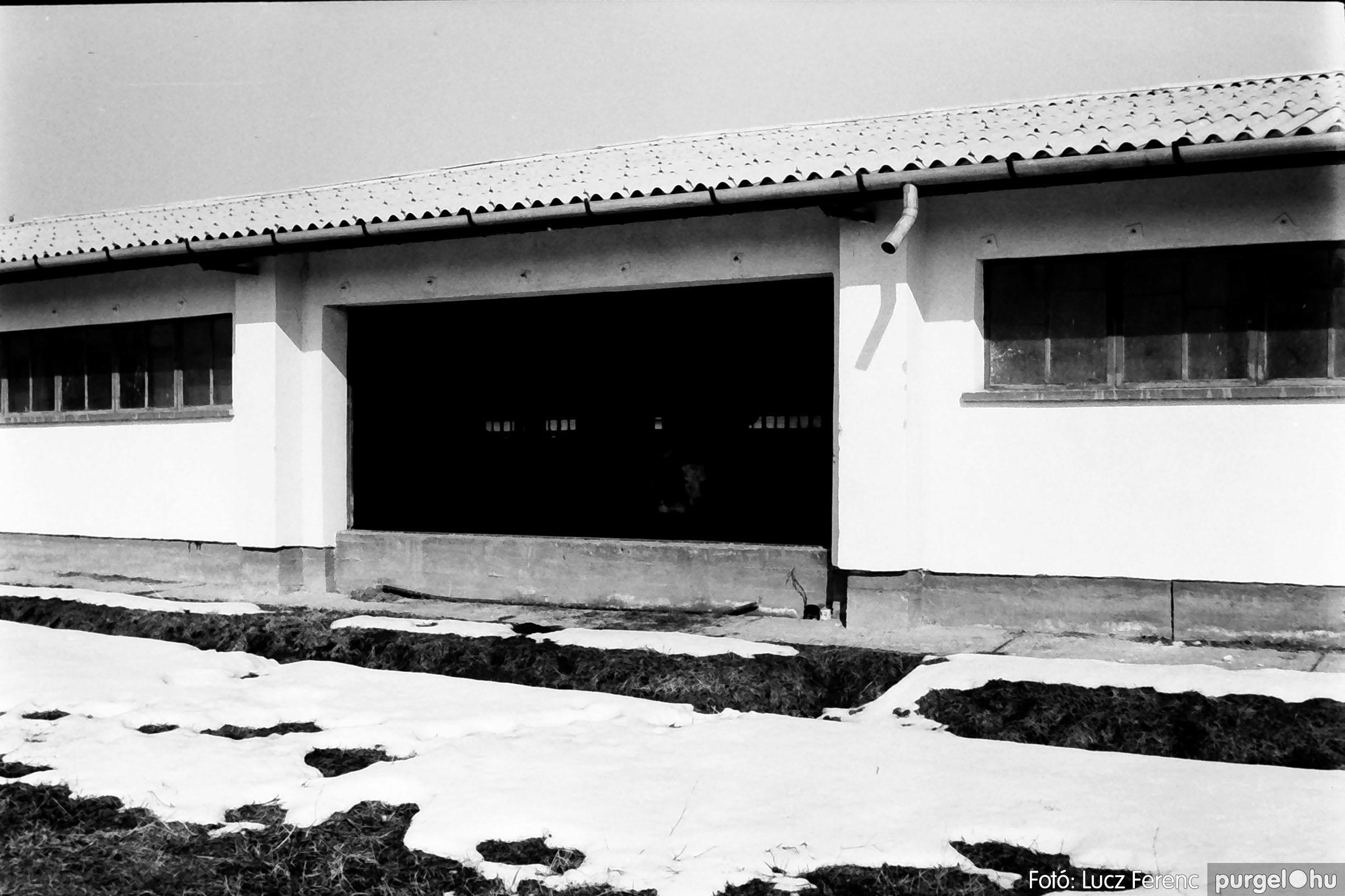 033-034. 1976. Élet a sápi tehenészetben 002 - Fotó: Lucz Ferenc.jpg