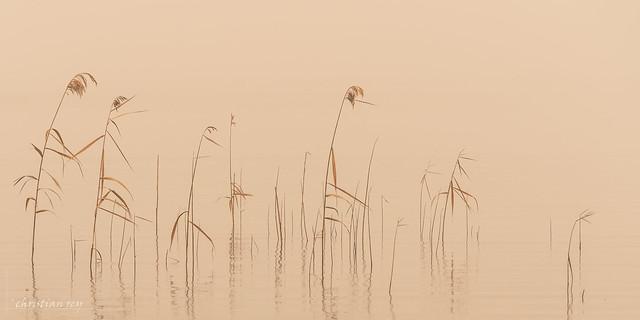 Rêverie dans les brumes du Sahara (Switzerland)