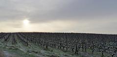 Thésée-la-Romaine (Loir-et-Cher)