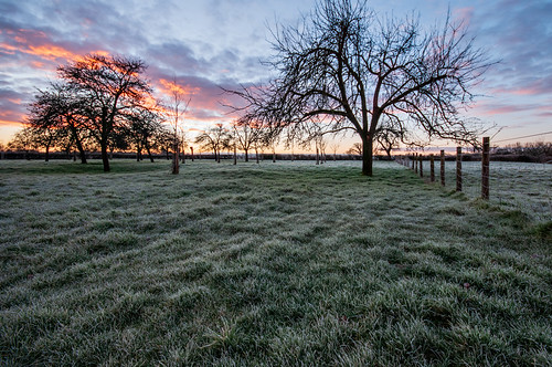 kenn somerset england northsomerset uk landscape agriculture orchard nikond300 stevetholephotography appletrees trees field sunrise sky glow dawn nature outdoors outside outdoorphotography winter february rural farmland fence clouds d300 morning grass golden nikon pastoral