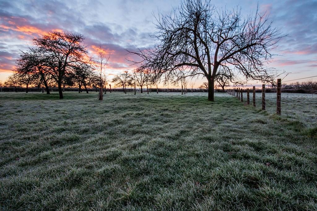 Orchard Sunrise 6 [explored on 13/2/2021]