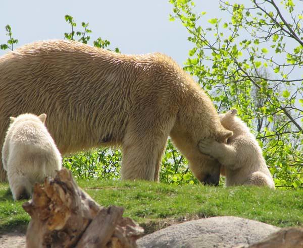 cub hug olinka