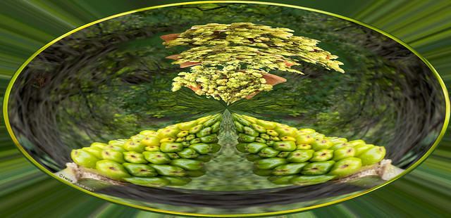 Abstract Nature Compo in the shades of green. Planispheric Art by #WhiteANGEL