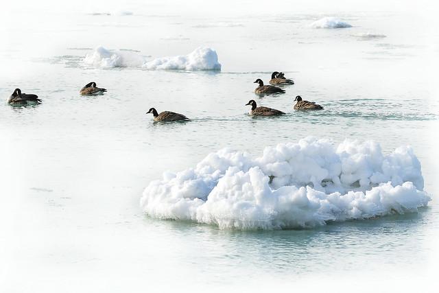 Ice Water Swim