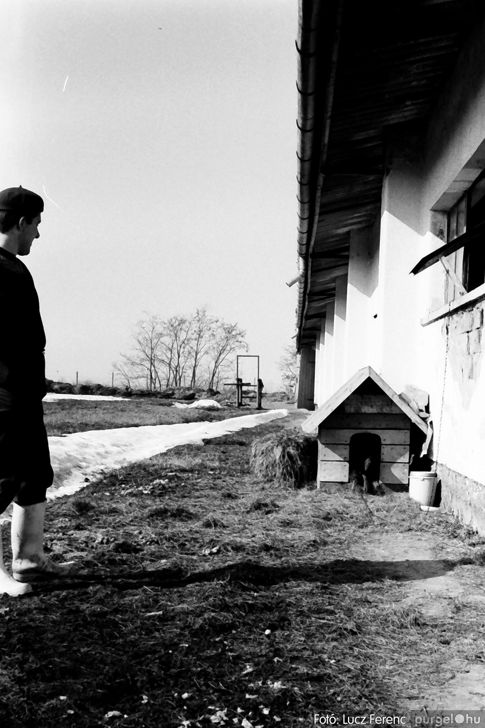 033-034. 1976. Élet a sápi tehenészetben 028 - Fotó: Lucz Ferenc.jpg