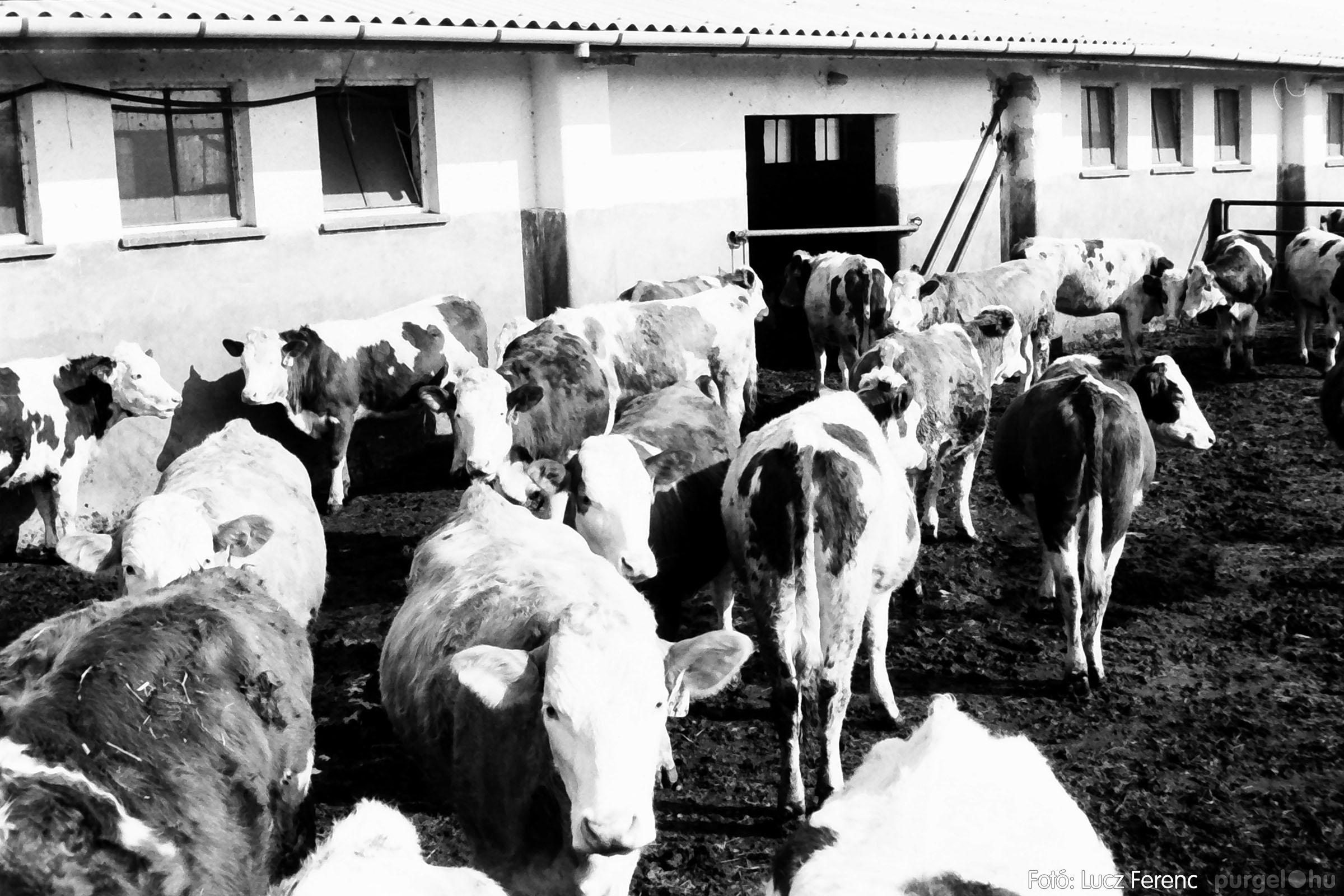 033-034. 1976. Élet a sápi tehenészetben 016 - Fotó: Lucz Ferenc.jpg
