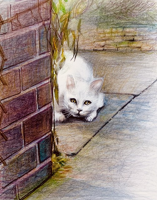 The New Neighbour. Last stage of 3. Derwent Lightfast coloured pencil drawing on white card by jmsw.