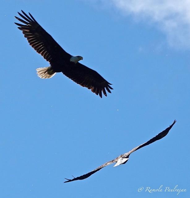 Gliding couple!
